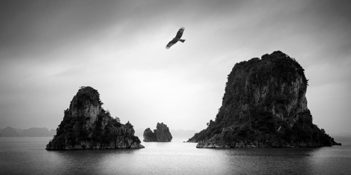 Baka Jataka – Heron Story