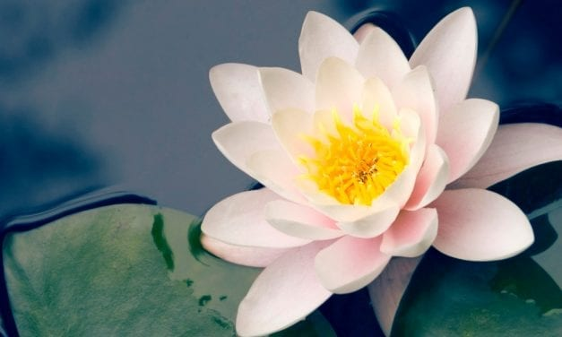 Buddhist Inspirational Tale: The Last Problem
