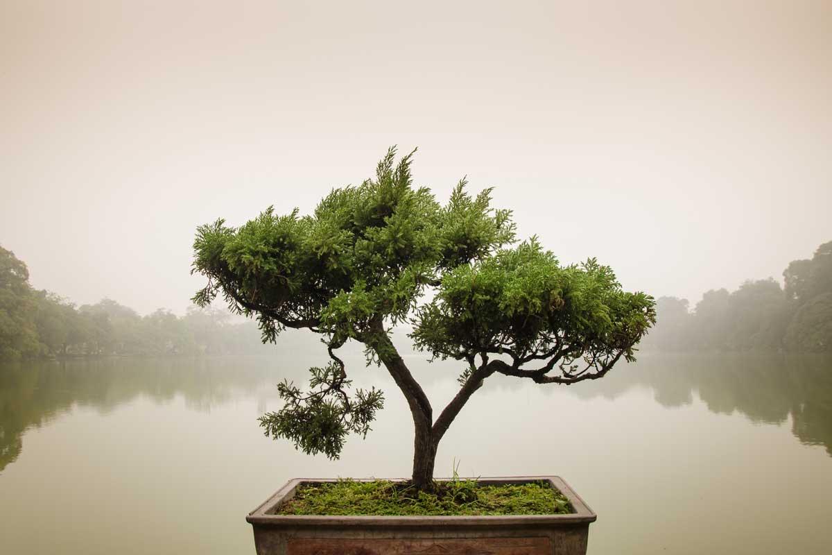 Six Steps to Transforming Self-Quarantine into a Spiritual Retreat - Balance